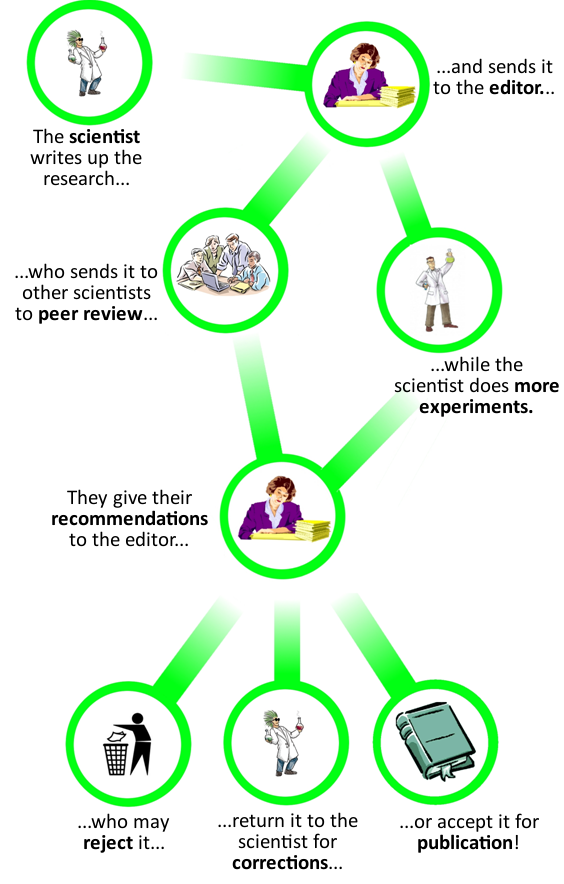Peer review flow chart
